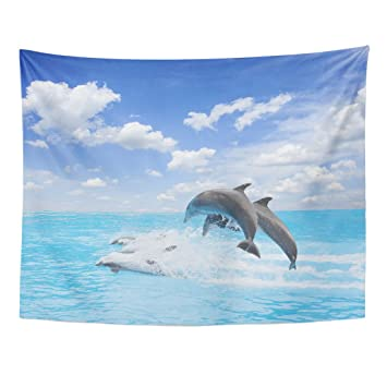 Tapestry Pack of Jumping Dolphins Beautiful Seasonic Cape with Deep Ocean Waters and Cloudscape at Bright Day Home Decor Wall Hanging for Living Room Bedroom Dormisette 60 x 80 Inches: Amazon.es: Juguetes