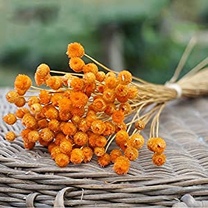 UHBGT Romantic Baby's Breath Gypsophila Dry Flower Party Home Photos Décoration 50pcs Orange 115