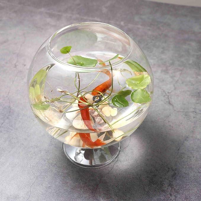 B Blesiya Pecera Transparente de Vidrio Moderno Jarrón Hidropónico Macetero Forma de Copa de Vino: Amazon.es: Hogar