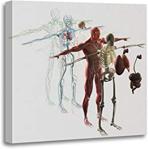 "Semtomn 20""x20""(50x50cm) Canvas Painting Wall Art Human Anatomy Exploded View Deconstructed Separate Muscle Bone Organs Nervous Home Decorative Artwork Prints"