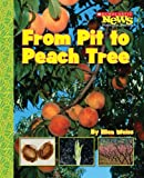 From Pit to Peach Tree (Scholastic News Nonfiction Readers: How Things Grow (Paperback))