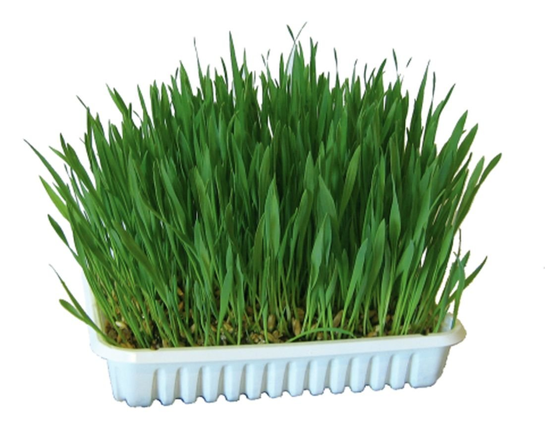 1 kg Nagergras (10 x 100g) Gras für Nager Kaninchen Hasen Meerschweinchen Hamster Futterergänzung Futtergras Nahrungsergänzung auch für Katzen als Katzengras geeignet Cajou