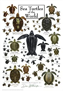 Heritage Sea Turtles Jigsaw Puzzle - 550 Pieces - Different Sea Turtles of The World