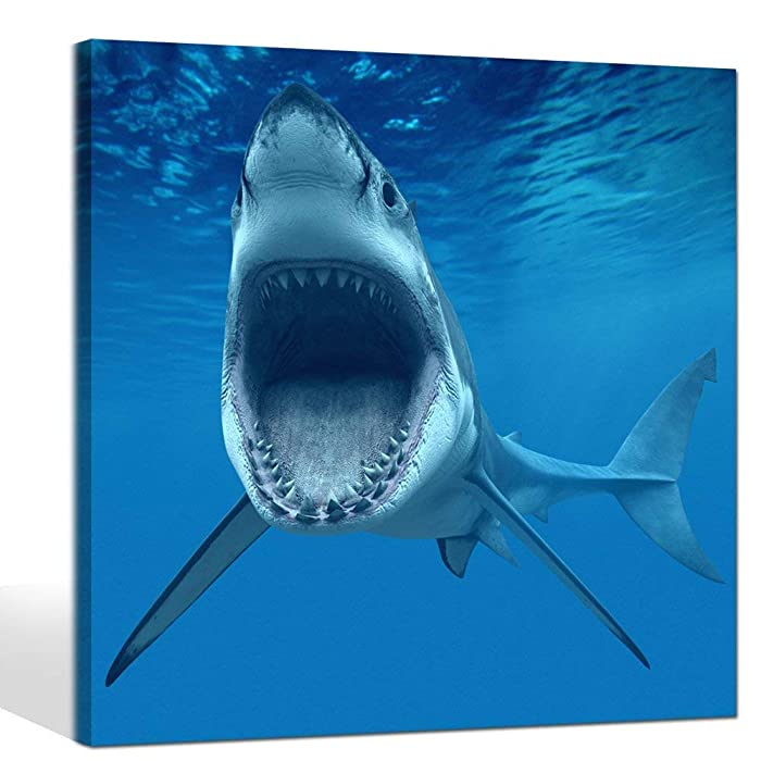 Top 10 Wall Decor Shark