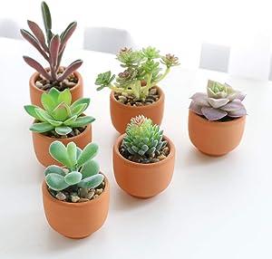 Artificial Succulent Plant Greenery Potted (6pcs Terracotta Pots)