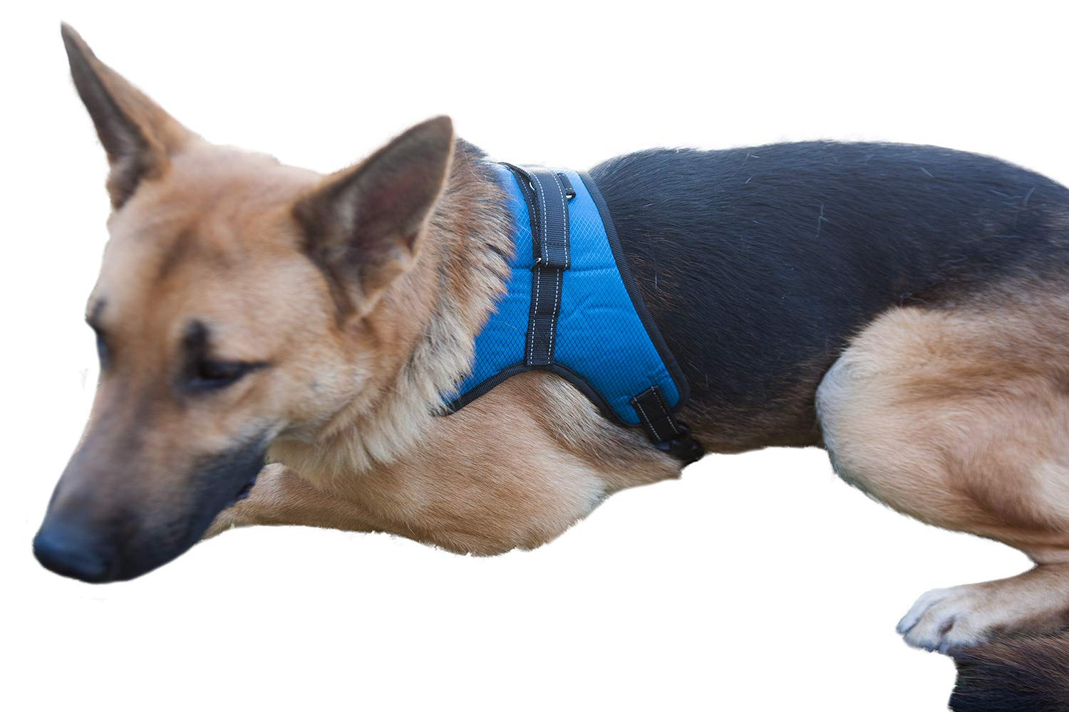 2PET Dog Harness No Pull Dog Harness Ideal for Walking, Service Dogs, Training, Hiking | Safety Padded Mesh Reflective Straps - XLarge Blue