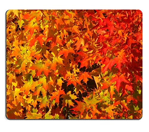 Glorious Natural - MSD Mousepad glorious colours Natural Rubber Material Image 3991661371