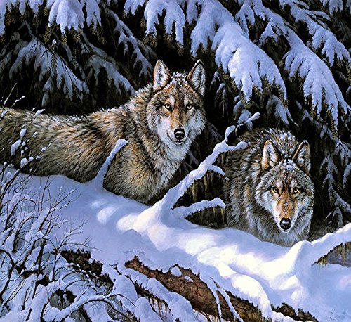 [ New Release, Wooden Framed or Not ] Diy Oil Painting by Numbers, Paint by Number Kits - Snow Wolf 16*20 inches - PBN Kit for Adults Girls Kids White Christmas Decor Decorations Gifts