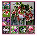 100 Pcs / Bag Fuchsias Seeds, Potted Flowers, Diy Planting Flowers, Bell Flower, Lantern Begonia, Mixed Color