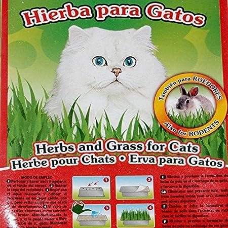 Moly - Hierba para Gatos Purgante y Digestiva con Bandeja Gatera - DAIS:20302: Amazon.es: Productos para mascotas