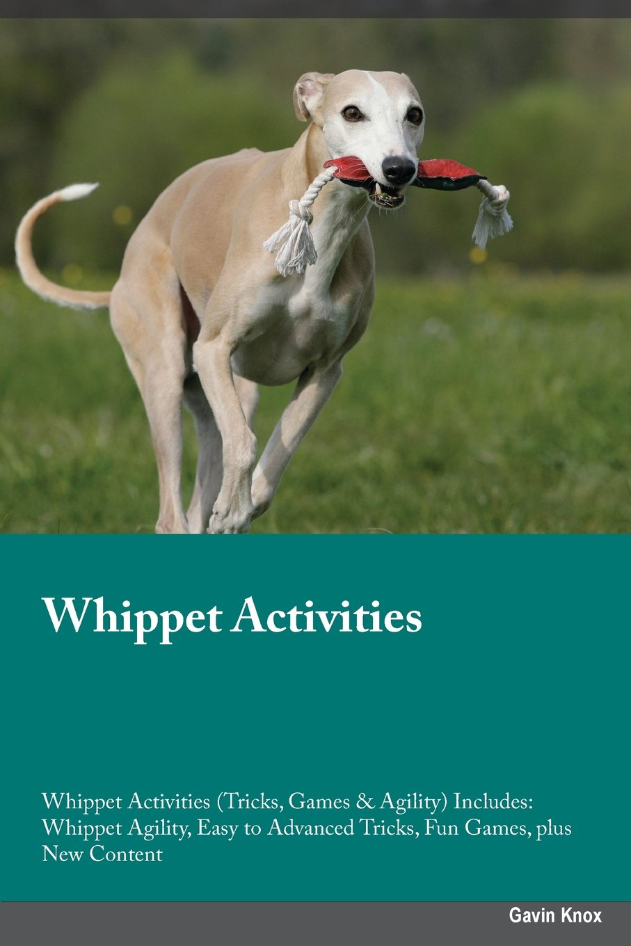 Download Whippet Activities Whippet Activities (Tricks, Games & Agility) Includes: Whippet Agility, Easy to Advanced Tricks, Fun Games, plus New Content pdf epub