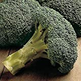 Packman Hybrid F1 Broccoli Seeds - You can Grow it All Season! (25 - Seeds) (Green)