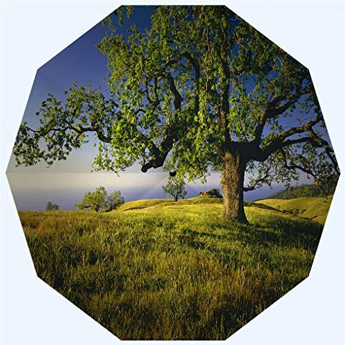 (Fashion Travel Umbrella Sun Umbrella UV protection automatic opening and closing, Lone Oak Tree On Hill Top g, windproof - rainproof - men - ladies - versatile - 42 inches)