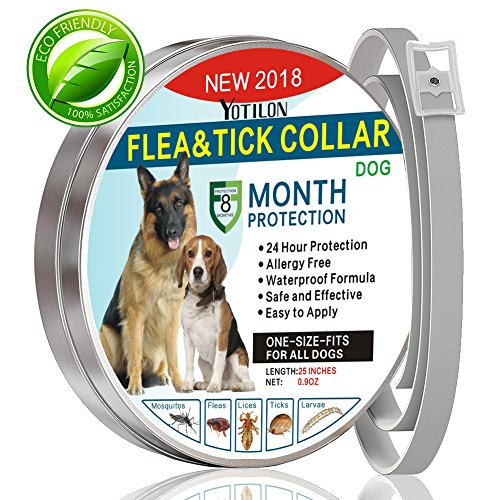 Flea and Tick Collar for Dog Waterproof Flea Control for Dog Cats (8 Months Protection) Pet Natural Essence Oil Pest Control Collars, Stops Bites, Flea Treatment one Size Fits All Dogs 25 Inch