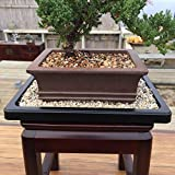 Bonsai Outlet Humidity Tray - Parent