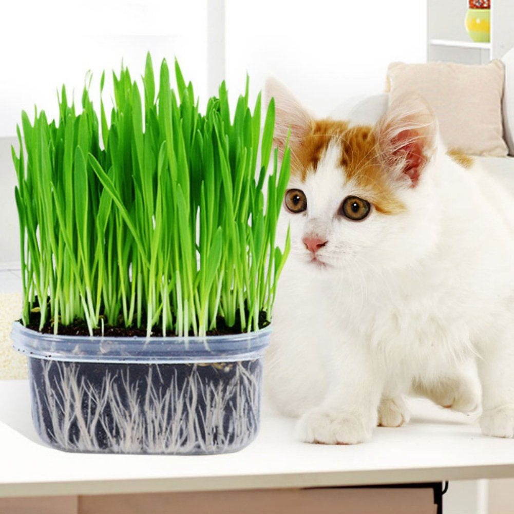 Reefa Cat Grass Seed,Organic Wheat Grass Seeds for Cats,Approx 800/1000 Seeds