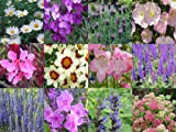 10 x Herbaceous Perennial Mixed Collection Plug Plants