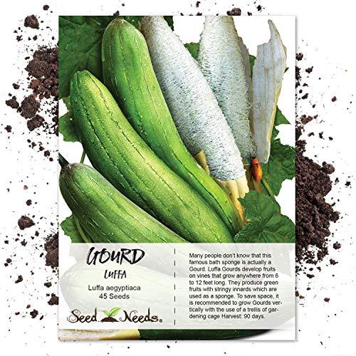 Luffa Gourd (Luffa aegyptiaca) Non-GMO
