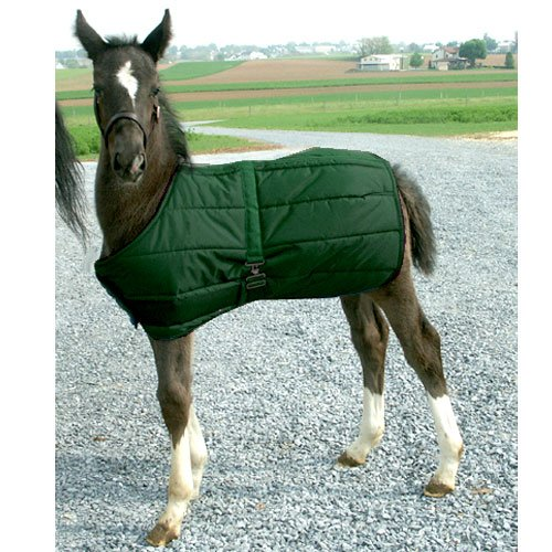 High Spirit Foal Blanket, Hunter Green