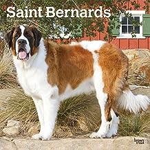 Saint Bernards 2019 Calendar