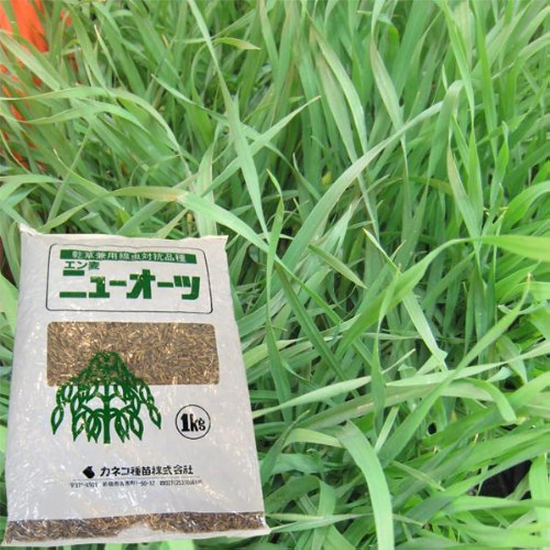鼻煙突喉頭緑肥?牧草 種 【 バミューダグラス 】 種子 1kg