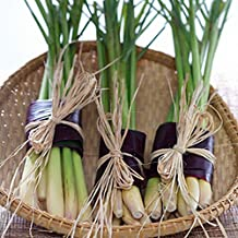 20PCS/Bag Cymbopogon Citratus Seeds Lemon Citronella Seeds Vanilla Seeds Lemon-Grass Potted Vegetables
