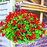 Lemon Slice Superbells Calibrachoa Petunia Annual Flower Seeds, 100 Seeds a Pack, 24 Colors to Choose,#FEA8Z8
