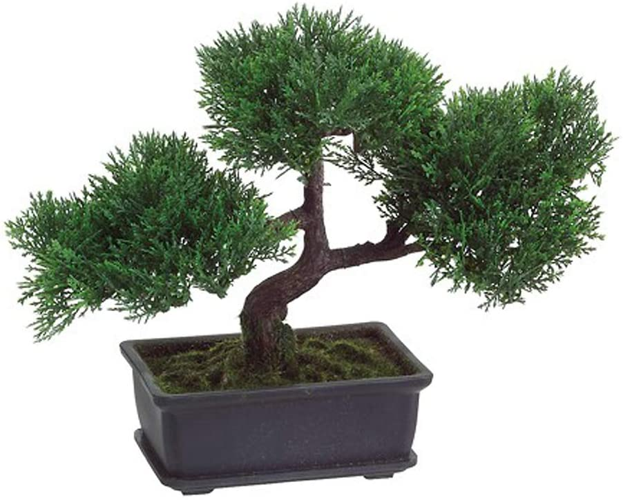 Amazon Com T Trove Artificial Japanese Cedar Bonsai Tree 9 Inch Tall Home Kitchen