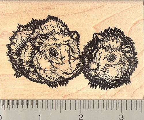 Abyssinian Guinea Pig Rubber Stamp, Rough Coated Cavy Pair