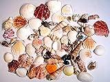CYS EXCEL Sea Shells Mixed Colorful Beach Seashells, Natural Seashells Perfect Accents Nautical Decor,Home Decor, Beach Theme Party Wedding Decoration (Series 5)