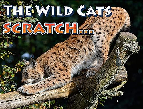 1 Pet+MasterMind+Withdraw+Scratch+Deterrent