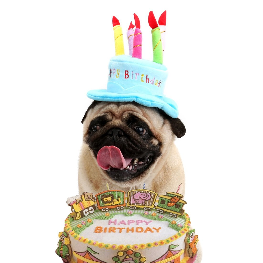 Dora Bridal Dog Cat Birthday Hat Adorable Pet Happy Party With Cake And 5 Colorful Candles Design Costume Dogs