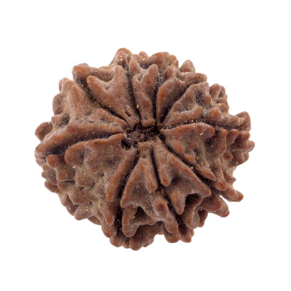 skyjewels Natural 9 Mukhi Nepali Rudraksha Bead-Original