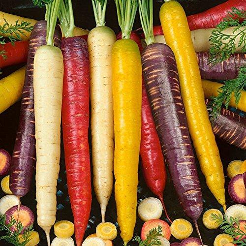 Rainbow Blend Carrot Seeds 200pcs Rare Vegetable Seeds Healthy Flavorful Organic Vegetable Seeds