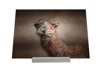 Portaretratos de alpaca
