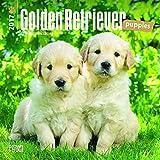 Golden Retriever Puppies 2017 Mini 7x7 (Multilingual Edition)