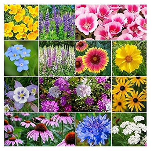 (David's Garden Seeds Flower Deer Resistant Mix SL112 (Multi) 500 Non-GMO, Open Pollinated Seeds)
