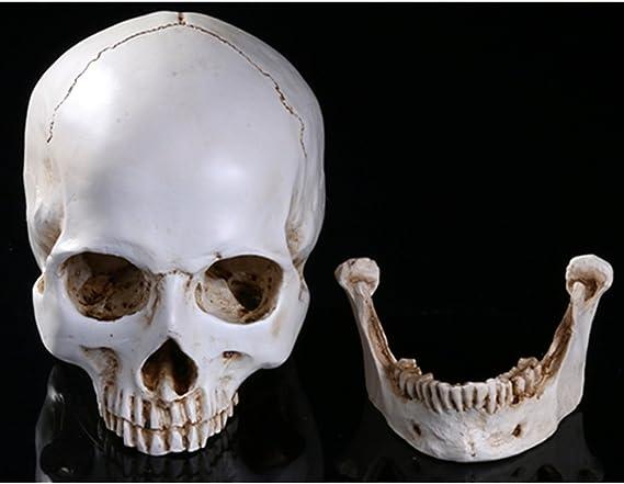 Tinksky Lifesize Human Skull Skeleton Model Replica Resin Medizinische Anatomische Tracing Medizinische Lehre Skelett Halloween Dekoration Statue Amazon De Küche Haushalt