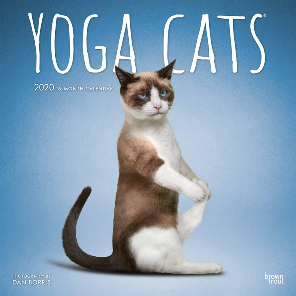 Yoga Cats 2020 12 X 12 Inch Monthly Square Wall Calendar Animals Humor Cat English Spanish And French Edition Browntrout Publishers Inc Browntrout Publishers Editing Team Browntrout Publishers Design Team Browntrout Publishers