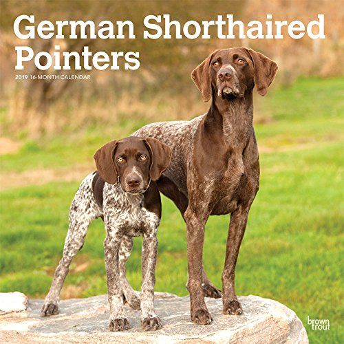 E.B.O.O.K German Shorthaired Pointers International Edition 2019 12 x 12 Inch Monthly Square Wall Calendar, An<br />[R.A.R]