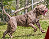 Muscle-Bully-Gains-Mass-Weight-Gainer-for-Bully-Breeds-45-Serving