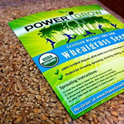 Certified Organic Non-GMO Wheatgrass Seeds - 5 Pounds Wheat Seed - Guaranteed to Grow