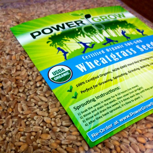 Certified Organic Non-GMO Wheatgrass Seeds - 5 Pounds Wheat Seed - Guaranteed to Grow (Best Grass Seed For Chickens)