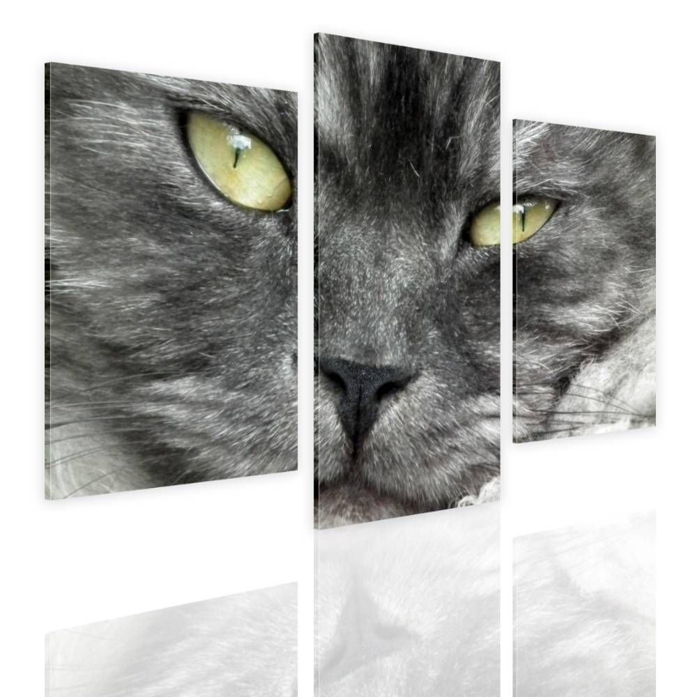 Alonline Art - Furry Cat Split 3 Panels Framed Stretched Canvas (100% Cotton) Gallery Wrapped - Ready to Hang | 33''x22'' - 84x56cm | 3 Panels Multi Framed Paints Framed Art Framed Artwork Giclee