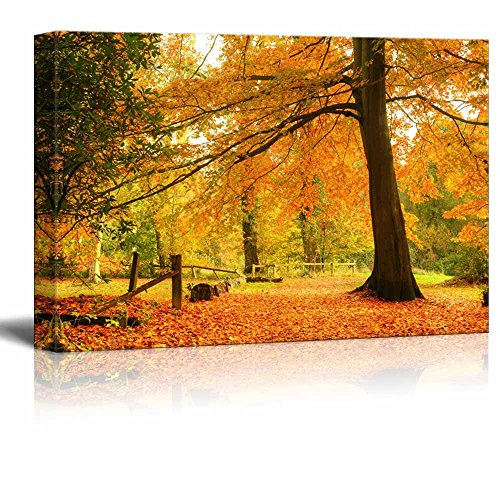 Canvas Prints Wall Art - Beautiful Yellow Autumn/Fall Forest Scene with Fallen Leaves - 24