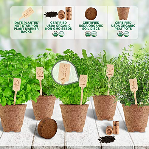 Indoor Herb Garden Starter Kit - Certified 100% USDA Organic Non GMO - Potting Soil, Peat Pots, 5 Herb Seed Basil, Cilantro, Parsley, Sage, Thyme - DIY Kitchen Grow Kit for Growing Herb Seeds Indoors by Spade To Fork (Image #3)