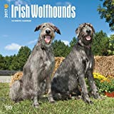 Irish Wolf Hounds Wolfhounds Dogs Wall Calendar 2017 {jg} Best Holiday Gift Ideas - Great for mom, dad, sister, brother, grandparents, , grandchildren, grandma, gay, lgbtq.