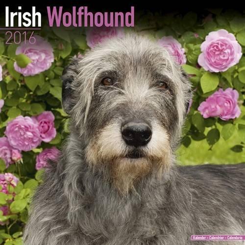 Irish Wolfhound Calendar - Breed Specific Irish Wolfhound Calendar - 2016 Wall calendars - Dog Calendars - Monthly Wall Calendar by Avonside