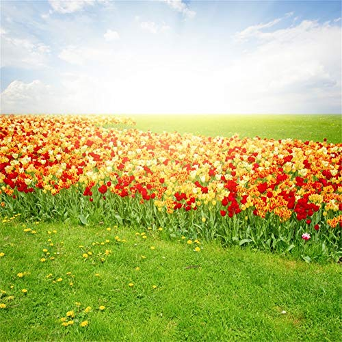 Laeacco Spring Scenery Backdrop Vinyl 10x10ft Vibrant Tulip Flowers Field Green Grassland Blue Sky White Clouds Background Child Kids Baby Adult Wedding Shoot Studio Landscape Wallpaper ()