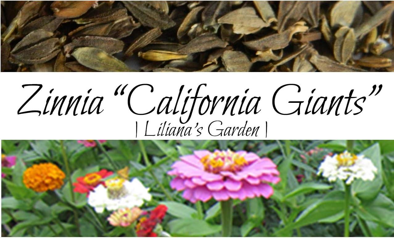 Amazon Com Flower Seeds Zinnia California Giant Mix Best Cut Flowers Liliana S Garden Garden Outdoor